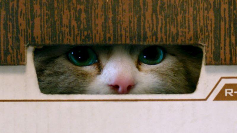 Una vita da gatto: il poster ufficiale della commedia più felina dell'anno